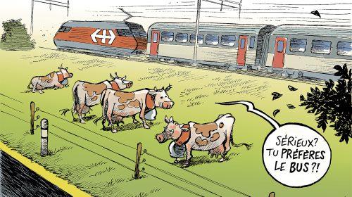 vaches train A